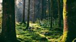 193 - NABU Baden-Wrttemberg - fr die Natur im Lndle