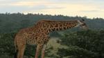 234 - KENYA dans les pas de Nyokabi