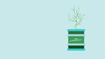 53 - LABLINE Les Biocarburants