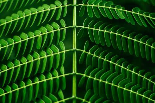 green plant actu